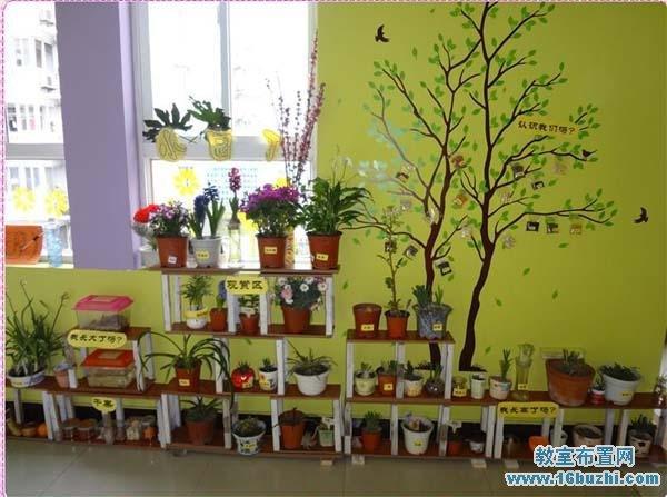 幼儿园自然角墙面布置图片
