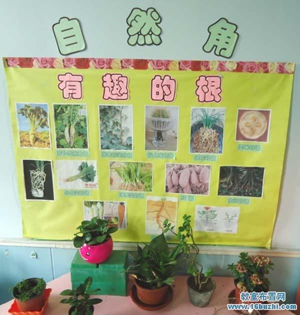 幼儿园自然角背景主题墙布置图片:有趣的根