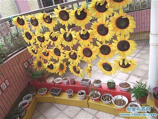 幼儿园自然角创新装饰图片:一片向日葵花