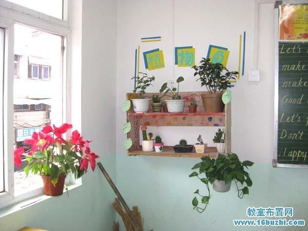 初二班级植物角布置图片